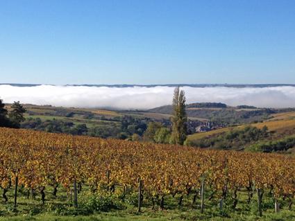 Bourgogne -Vignoble - Sur la route d'Irancy