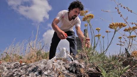 GIORGIO cueillette herbes aromatiques