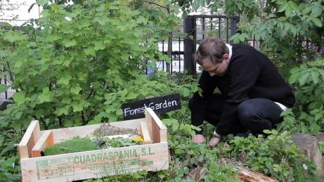 Picking forest garden