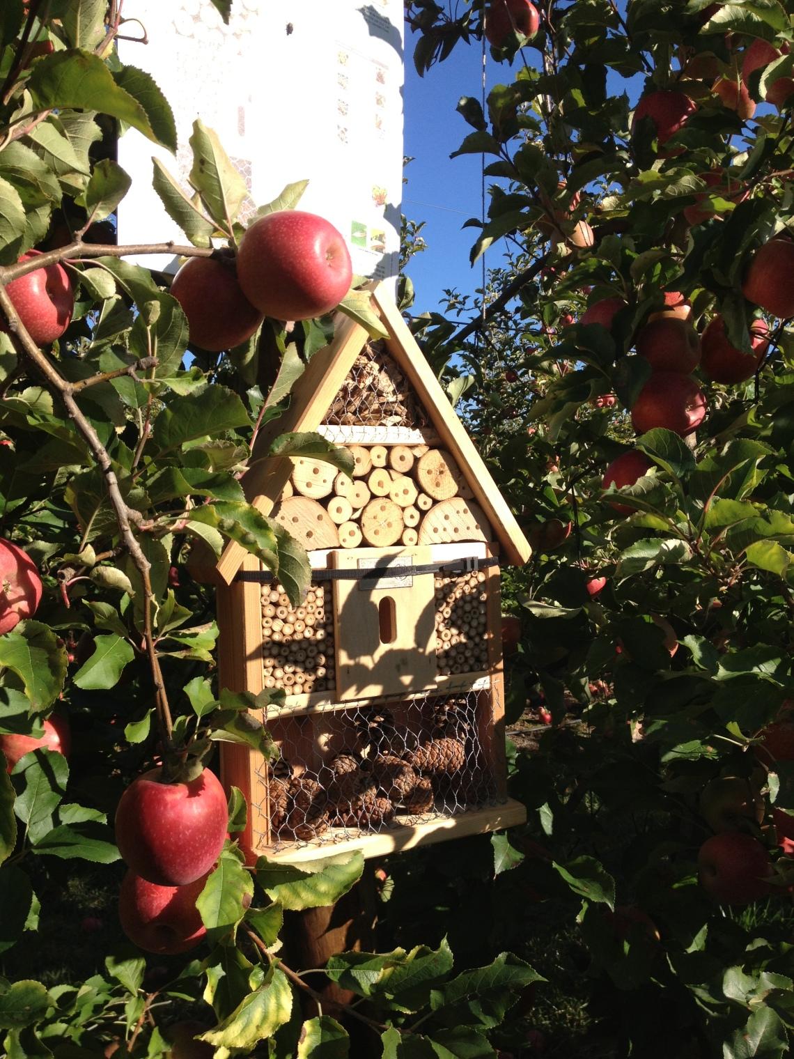 La maison des insectes, ici pas d'insecticide : on est en agriculture raisonnée