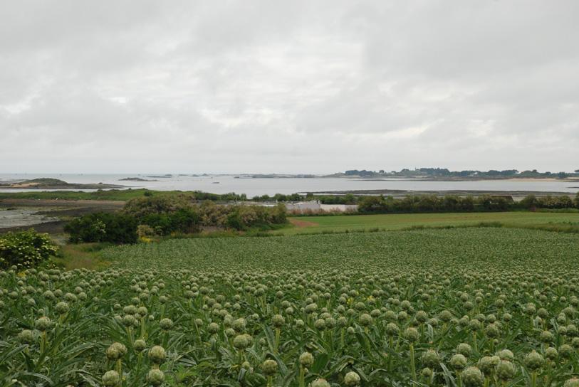 Les exploitations des agriculteurs Prince de Bretagne sont proches des côtes.