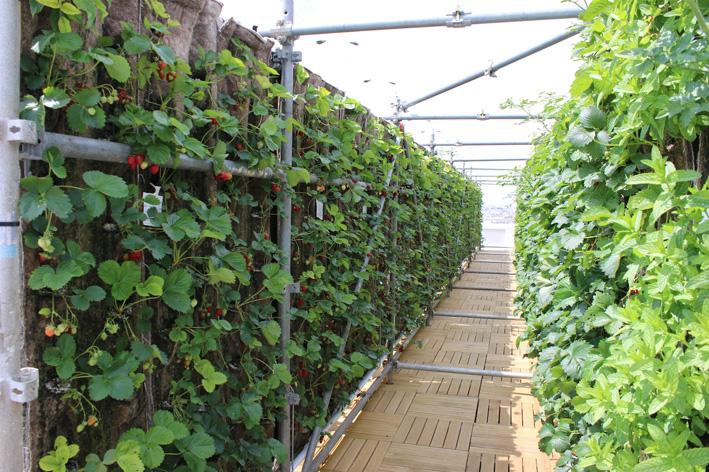 Plus de 1000 m2 de plantations ont été installées.