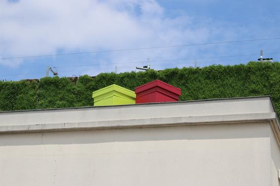 Des ruches ont aussi été installées pour polleniser les plantations.