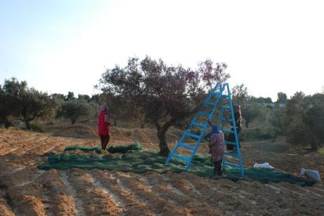 olive14_bd