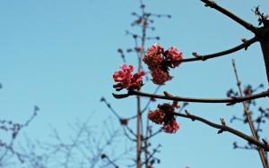 C'est le printemps dans les jardins parisiens